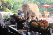 Thailand - AFS-Thailand-pics15