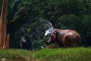 Thailand - ElephantHills06