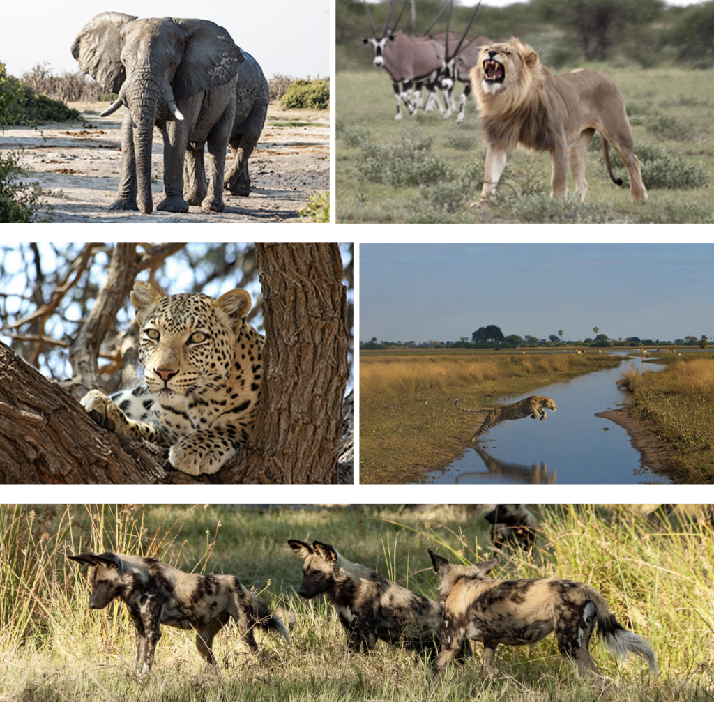 Cry of the Kalahari – experience the wild heart of Africa