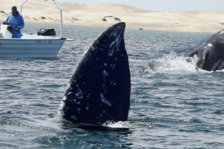 Singles tour Baha Whales & Sealions