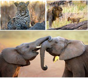 Safari and Wildlife Centre