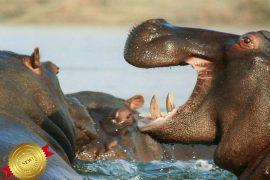 solo safari africa