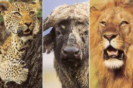 AFS Kenya Safari