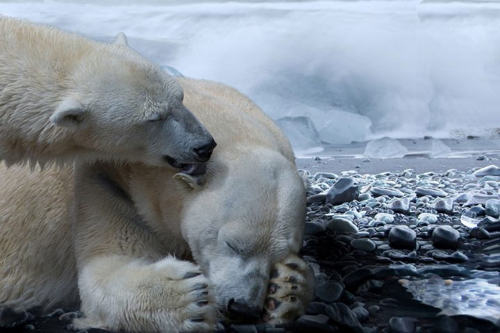 #singlerstour #polarbeartour